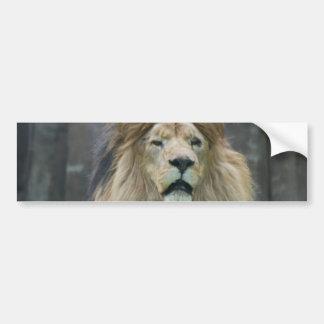 Pegatina para el parachoques del león etiqueta de parachoque