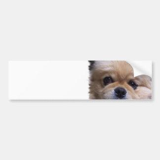Pegatina para el parachoques del perrito de Peking Pegatina De Parachoque