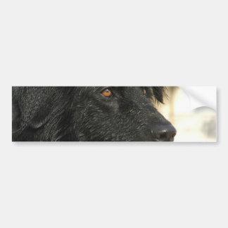 Pegatina para el parachoques del perro de Terranov Pegatina Para Auto