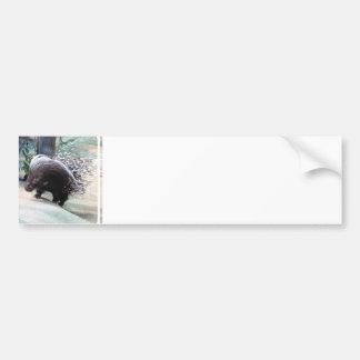 Pegatina para el parachoques espinosa del puerco e pegatina de parachoque