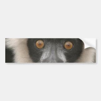 Pegatina para el parachoques rizada del Lemur Pegatina Para Auto