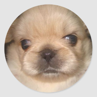 pegatina pekingese del perrito