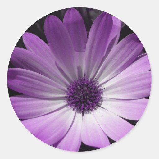 Pegatina púrpura de la flor de la margarita