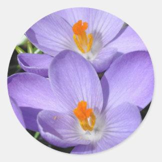 Pegatina púrpura del azafrán