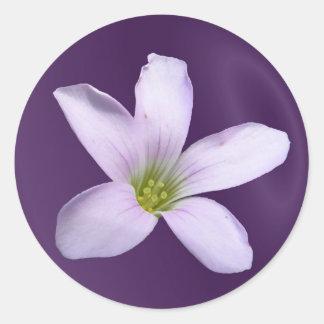 Pegatina púrpura del ~ del trébol