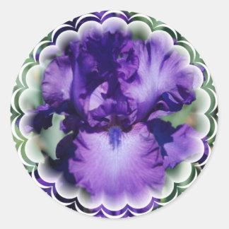 Pegatina púrpura del iris barbudo