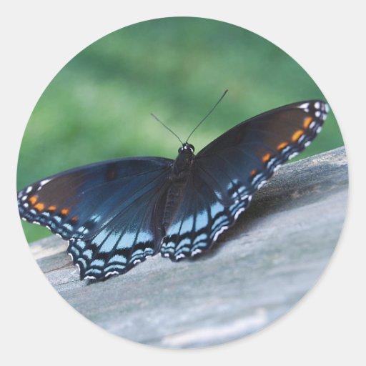 pegatina púrpura Rojo-manchado de la mariposa