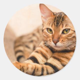 Pegatina redondo clásico del gato lindo, brillante