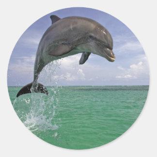 Pegatina redondo clásico, delfín brillante en el