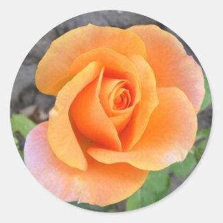 Pegatina redondo con color de rosa anaranjado