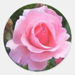 Pegatina redondo con color de rosa rosado hermoso