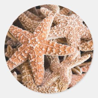Pegatina redondo de las estrellas de mar del