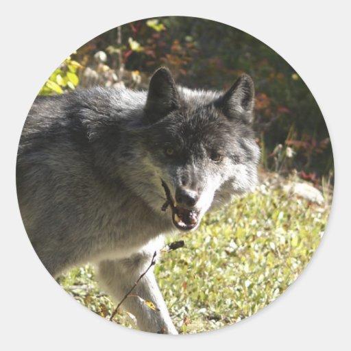 Pegatina redondo del Fauna-partidario del lobo