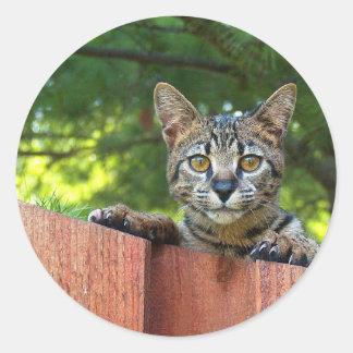 Pegatina redondo del gato de la sabana
