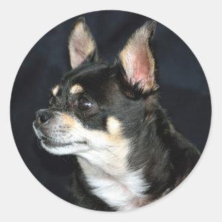 Pegatina redondo del perro lindo de la chihuahua pegatina redonda