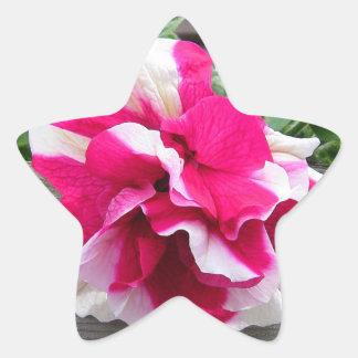 Pegatina rizado de la estrella de la petunia