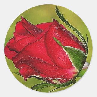 Pegatina rojo del capullo de rosa