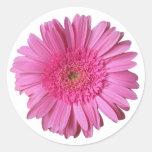 Pegatina rosado brillante colorido de la margarita