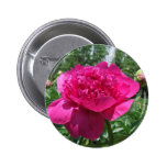 Pegatina rosado brillante de la flor del Peony Pins