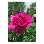 Pegatina rosado brillante de la flor del Peony Tarjetón