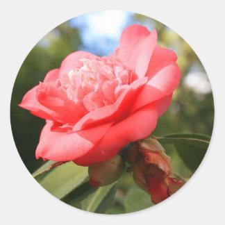 Pegatina rosado de la flor de Camelia