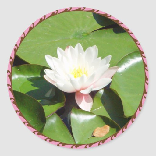 Pegatina rosado de Lilly del agua