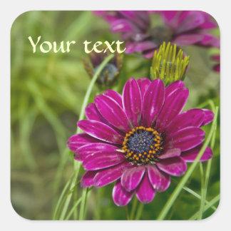 Pegatina rosado del cuadrado de la flor de la