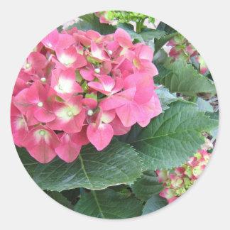 Pegatina rosado del Hydrangea