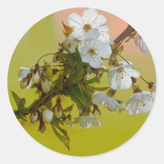 Pegatina salvaje de la flor de cerezo