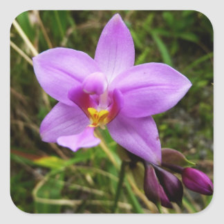 Pegatina salvaje de la orquídea