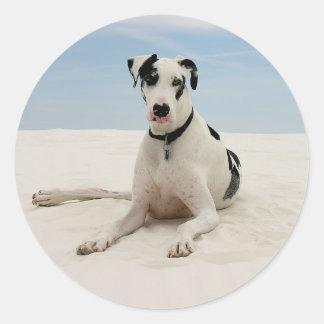 Pegatina/sello del perro de perrito de great dane pegatina redonda