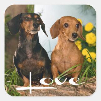 Pegatina/sello del perro de perrito del Dachshund Pegatina Cuadrada