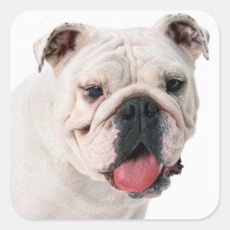 Pegatina/sello ingleses del perro de perrito del pegatina cuadrada