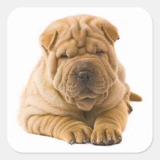 Pegatina/sellos del perro de perrito de Shar Pei Pegatina Cuadrada