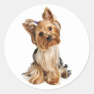 Pegatina/sellos del perro de perrito de Yorkshire Pegatina Redonda