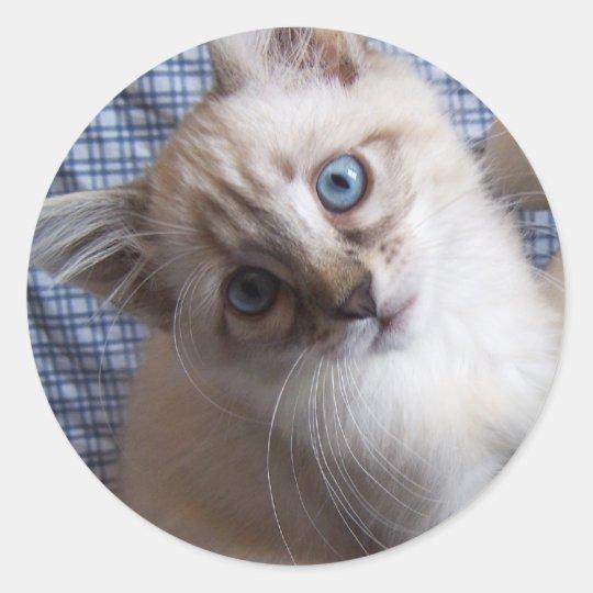 pegatina siamés del gatito