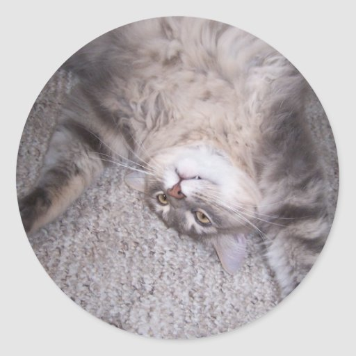 pegatina tonto del gatito