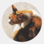 Pegatina tricolor del gato