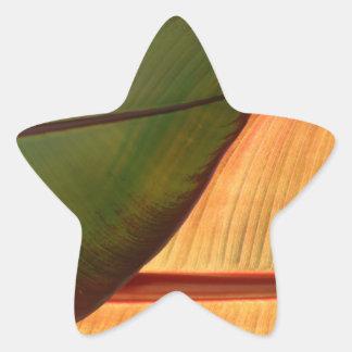 Pegatina tropical de la estrella de la hoja