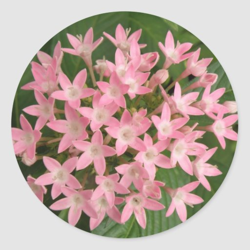 Pegatina tropical rosado bonito de las flores