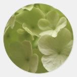 Pegatina verde del Hydrangea