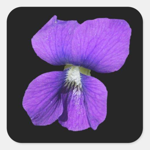 Pegatina violeta púrpura