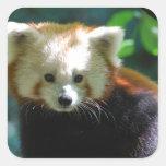 Pegatinas adorables de la panda roja calcomania cuadrada personalizada