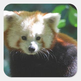 Pegatinas adorables de la panda roja pegatina cuadrada