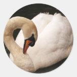 Pegatinas agraciados del cisne etiqueta redonda