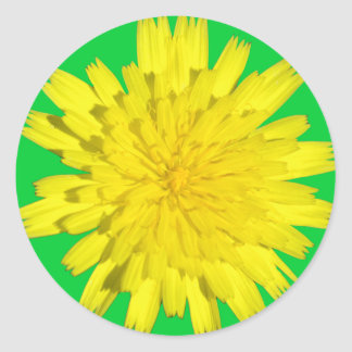 Pegatinas amarillos de la flor pegatina redonda