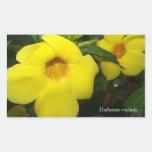 Pegatinas amarillos de las orquídeas