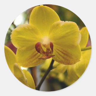 Pegatinas amarillos de las orquídeas pegatina redonda