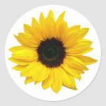 Pegatinas amarillos del sello del sobre de la flor etiqueta redonda