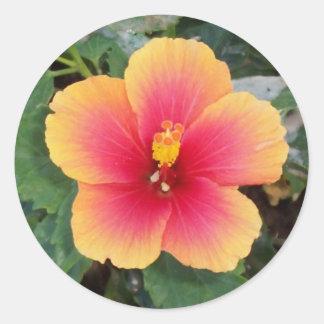 Pegatinas amarillos y rosados de la foto de la pegatina redonda